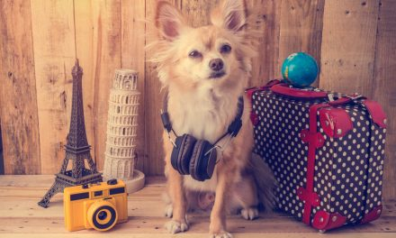What to Pack in Your Dog's Holiday Bag